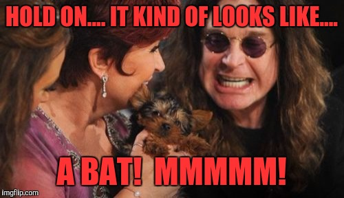 Selfish Ozzy |  HOLD ON.... IT KIND OF LOOKS LIKE.... A BAT!  MMMMM! | image tagged in memes,selfish ozzy | made w/ Imgflip meme maker