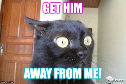 Cats | GET HIM AWAY FROM ME! | image tagged in cats | made w/ Imgflip meme maker