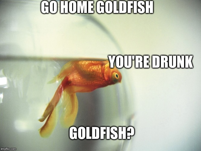 GO HOME GOLDFISH YOU'RE DRUNK GOLDFISH? | image tagged in memes | made w/ Imgflip meme maker
