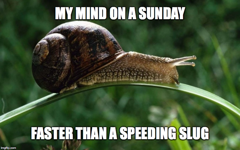 Sunday Thinker | MY MIND ON A SUNDAY FASTER THAN A SPEEDING SLUG | image tagged in speedy | made w/ Imgflip meme maker