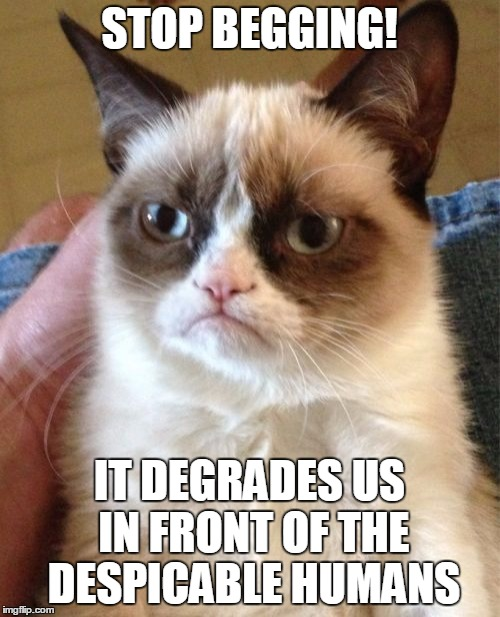 Grumpy Cat Meme | STOP BEGGING! IT DEGRADES US IN FRONT OF THE DESPICABLE HUMANS | image tagged in memes,grumpy cat | made w/ Imgflip meme maker