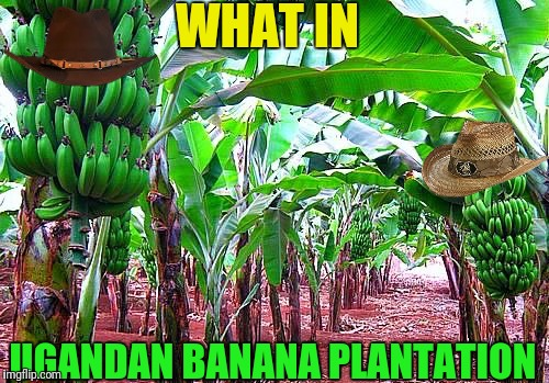 WHAT IN UGANDAN BANANA PLANTATION | made w/ Imgflip meme maker
