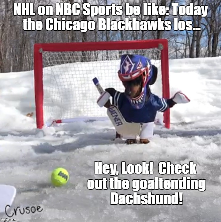NHL on NBC Sports Goaltending Dachshund |  NHL on NBC Sports be like: Today the Chicago Blackhawks los... Hey, Look!  Check out the goaltending Dachshund! | image tagged in nhl,nbc,goalkeeper,dachshund | made w/ Imgflip meme maker