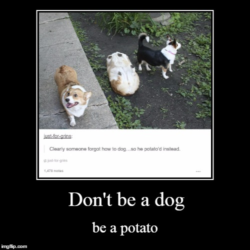 No offense Raydog | Don't be a dog | be a potato | image tagged in funny,demotivationals,dog,potato | made w/ Imgflip demotivational maker
