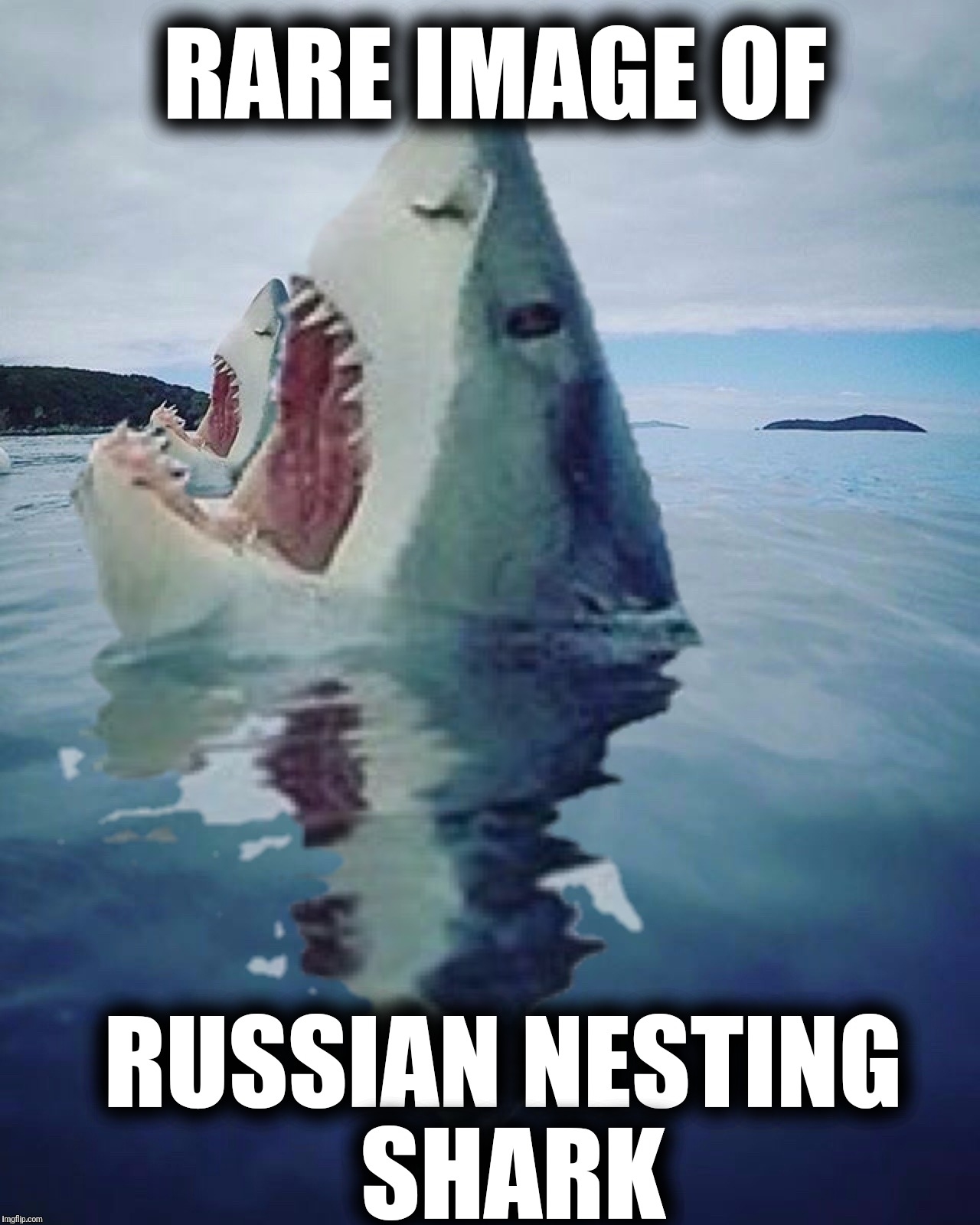 RARE IMAGE OF RUSSIAN NESTING SHARK | made w/ Imgflip meme maker