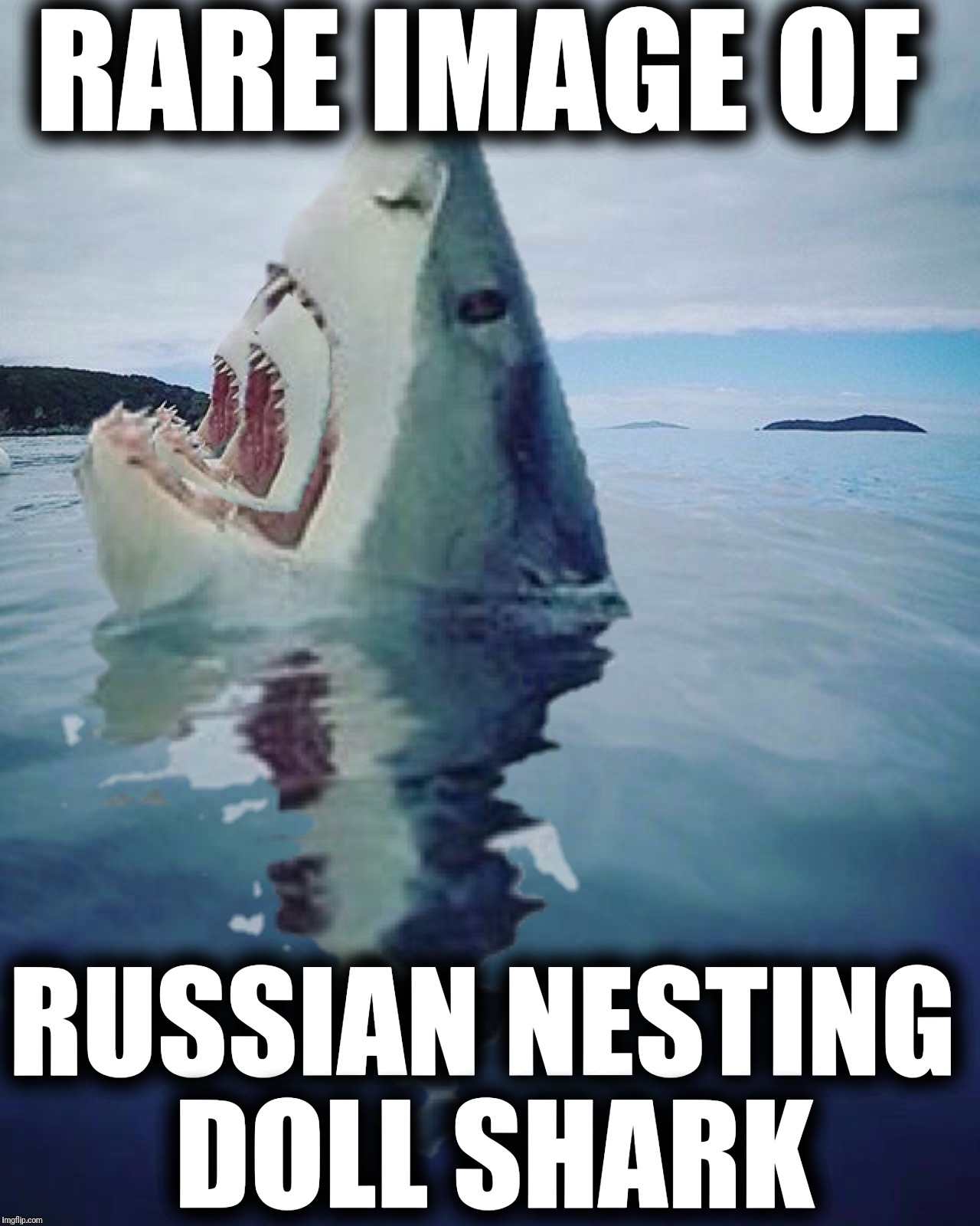 I saw this when I was waterskiing... or memeing... I can't remember | RARE IMAGE OF RUSSIAN NESTING DOLL SHARK | image tagged in memes,rare image,russian nesting doll shark,it came from the comments,memory bank is full,remember that | made w/ Imgflip meme maker
