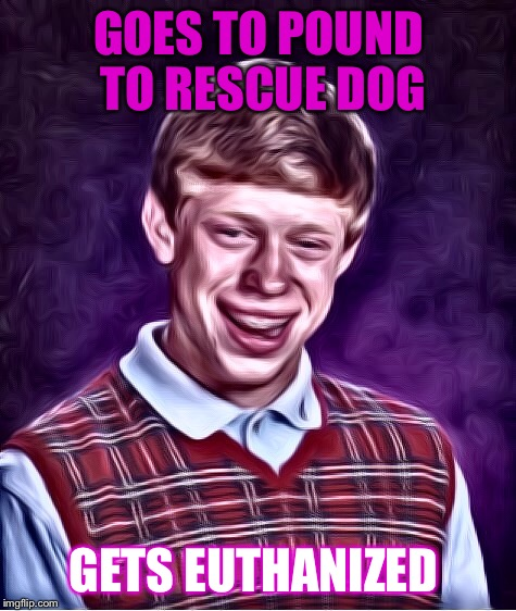 Always on the wrong side of trouble. | GOES TO POUND TO RESCUE DOG GETS EUTHANIZED | image tagged in funny,memes,bad luck brian,dashhopes,raydog | made w/ Imgflip meme maker