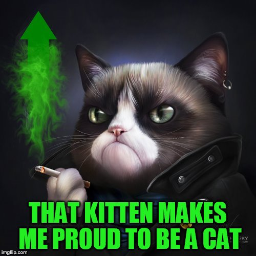 THAT KITTEN MAKES ME PROUD TO BE A CAT | made w/ Imgflip meme maker