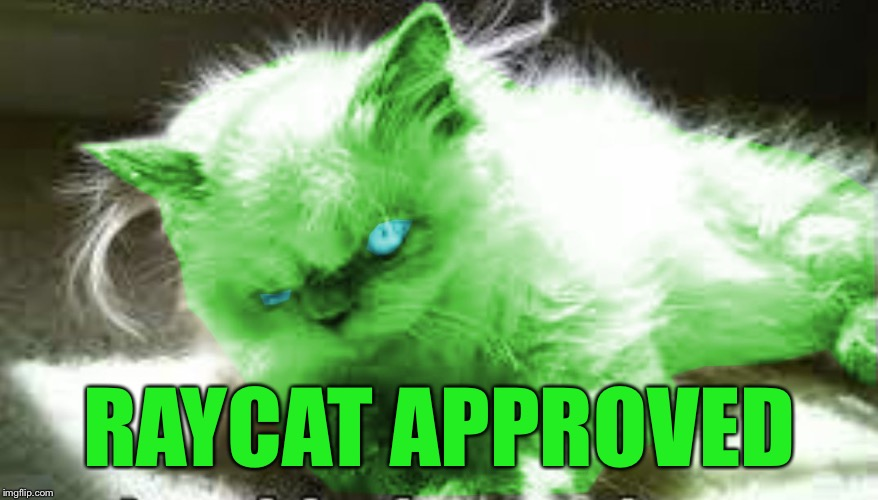 mad raycat | RAYCAT APPROVED | image tagged in mad raycat | made w/ Imgflip meme maker