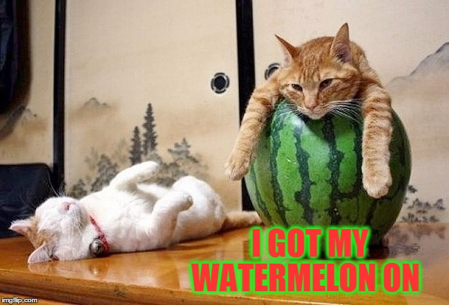 I GOT MY WATERMELON ON | made w/ Imgflip meme maker