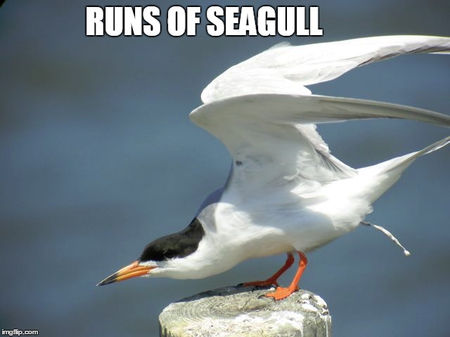 RUNS OF SEAGULL | made w/ Imgflip meme maker