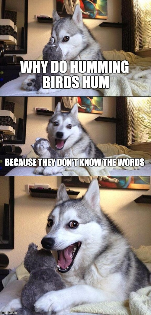 Bad Pun Dog Meme | WHY DO HUMMING BIRDS HUM BECAUSE THEY DON'T KNOW THE WORDS | image tagged in memes,bad pun dog | made w/ Imgflip meme maker