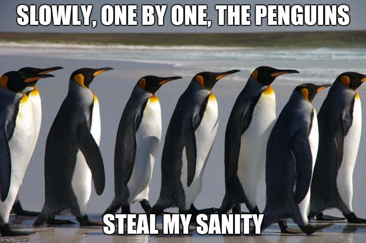 For Those Non-conformists... | SLOWLY, ONE BY ONE, THE PENGUINS STEAL MY SANITY | image tagged in conformity,funny,penguins,society | made w/ Imgflip meme maker