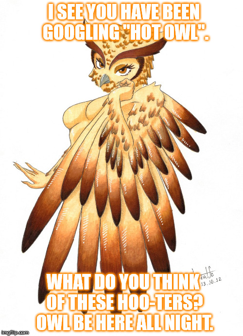 "Say no to beak-jobs boys. | I SEE YOU HAVE BEEN GOOGLING ""HOT OWL"". WHAT DO YOU THINK OF THESE HOO-TERS? OWL BE HERE ALL NIGHT. 