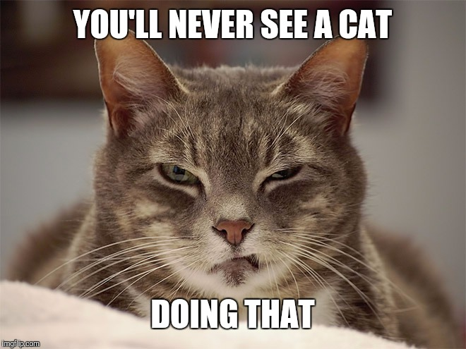 Sarcasm Cat | YOU'LL NEVER SEE A CAT DOING THAT | image tagged in sarcasm cat | made w/ Imgflip meme maker