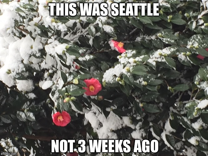 THIS WAS SEATTLE NOT 3 WEEKS AGO | made w/ Imgflip meme maker