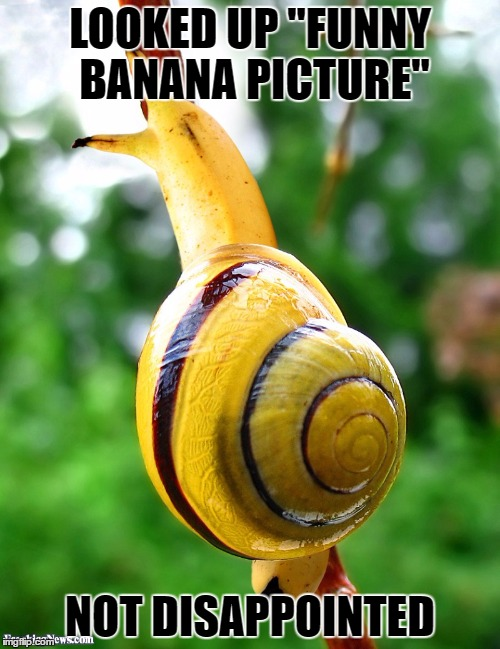 "Banana week | LOOKED UP ""FUNNY BANANA PICTURE"" NOT DISAPPOINTED 