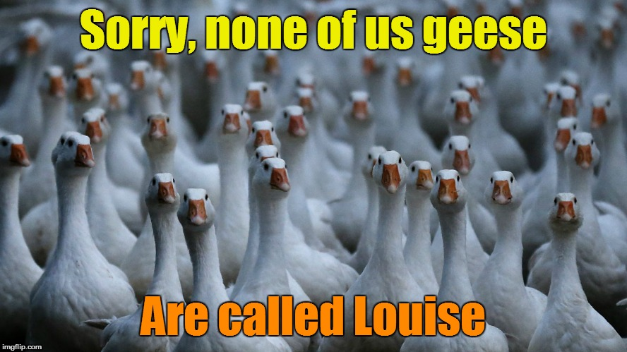 Sorry, none of us geese Are called Louise | made w/ Imgflip meme maker