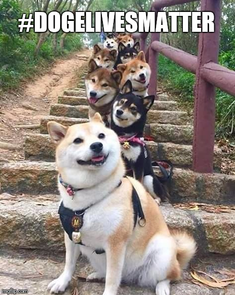 Protest most organised much unity | #DOGELIVESMATTER | image tagged in memes,doge,dogs,animals,much peace,funny | made w/ Imgflip meme maker