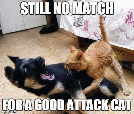 STILL NO MATCH FOR A GOOD ATTACK CAT | made w/ Imgflip meme maker