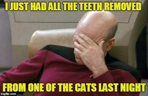 Captain Picard Facepalm Meme | I JUST HAD ALL THE TEETH REMOVED FROM ONE OF THE CATS LAST NIGHT | image tagged in memes,captain picard facepalm | made w/ Imgflip meme maker