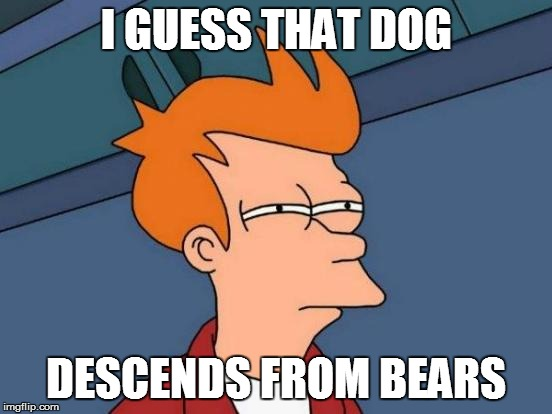 Futurama Fry Meme | I GUESS THAT DOG DESCENDS FROM BEARS | image tagged in memes,futurama fry | made w/ Imgflip meme maker