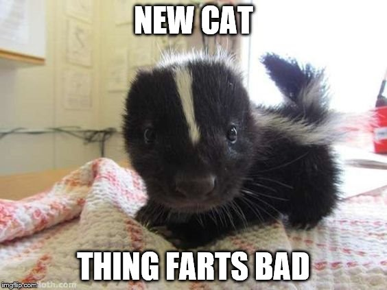 Farting cat | NEW CAT THING FARTS BAD | image tagged in this stinks | made w/ Imgflip meme maker