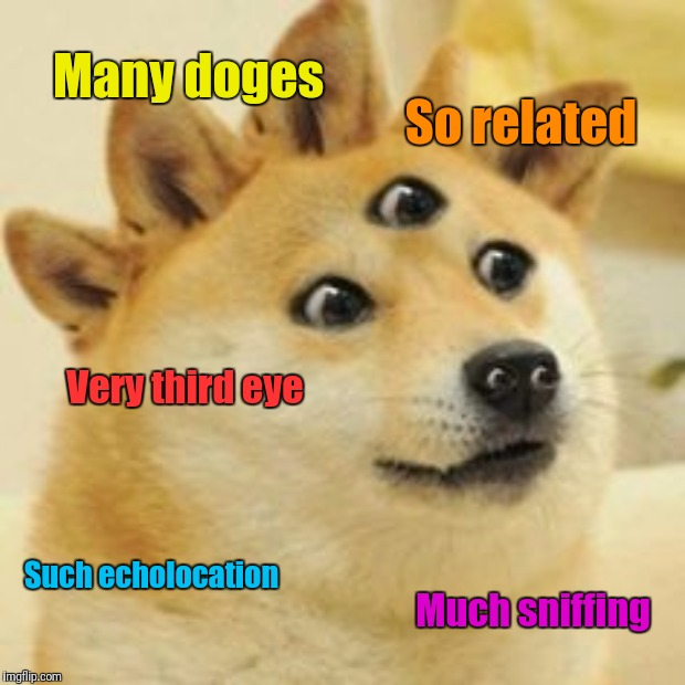 Many doges So related Very third eye Such echolocation Much sniffing | made w/ Imgflip meme maker