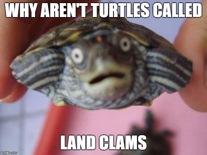 WHY AREN'T TURTLES CALLED LAND CLAMS | made w/ Imgflip meme maker