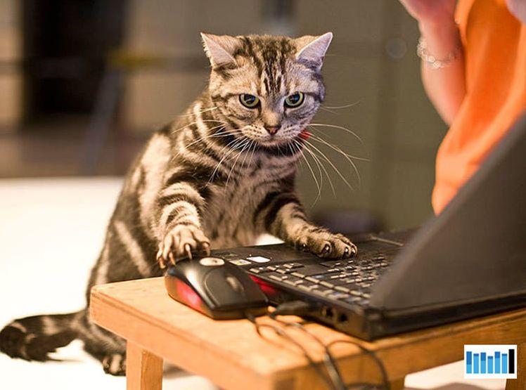 best anti flea medication for cats