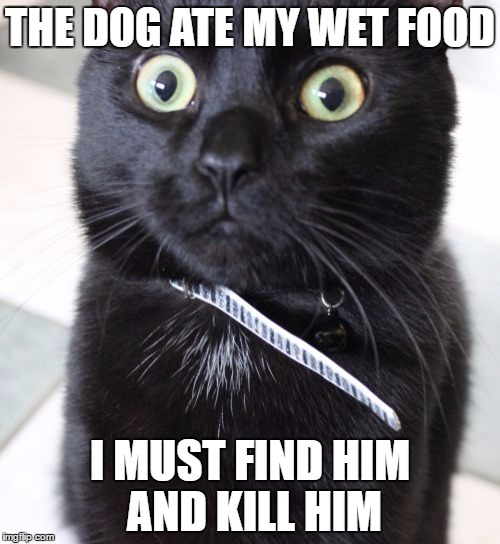 Woah Kitty | THE DOG ATE MY WET FOOD I MUST FIND HIM AND KILL HIM | image tagged in memes,woah kitty | made w/ Imgflip meme maker