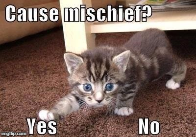 Cause mischief | M | image tagged in cat,funny memes | made w/ Imgflip meme maker