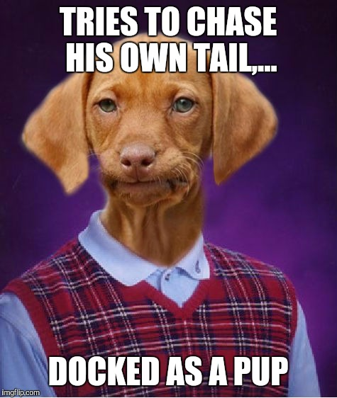 TRIES TO CHASE HIS OWN TAIL,... DOCKED AS A PUP | made w/ Imgflip meme maker
