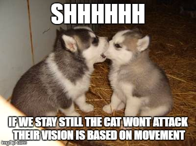 Cute Puppies |  SHHHHHH; IF WE STAY STILL THE CAT WONT ATTACK THEIR VISION IS BASED ON MOVEMENT | image tagged in memes,cute puppies,cats,funny,advice,dogs | made w/ Imgflip meme maker