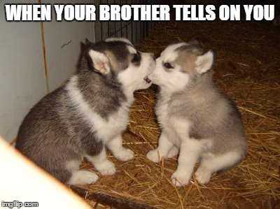 Cute Puppies | WHEN YOUR BROTHER TELLS ON YOU | image tagged in memes,cute puppies,dogs,advise,funny | made w/ Imgflip meme maker