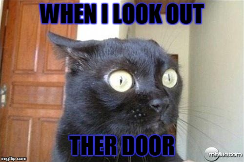 Cats | WHEN I LOOK OUT THER DOOR | image tagged in cats | made w/ Imgflip meme maker