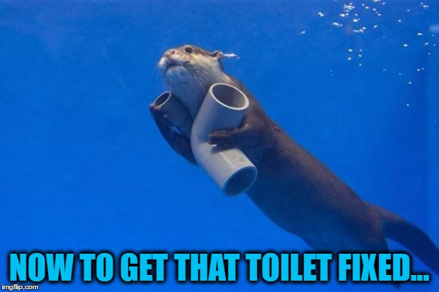Otters are known for their plumbing abilities... :) | NOW TO GET THAT TOILET FIXED... | image tagged in plumbing otter,memes,animals,toilet,plumbing | made w/ Imgflip meme maker