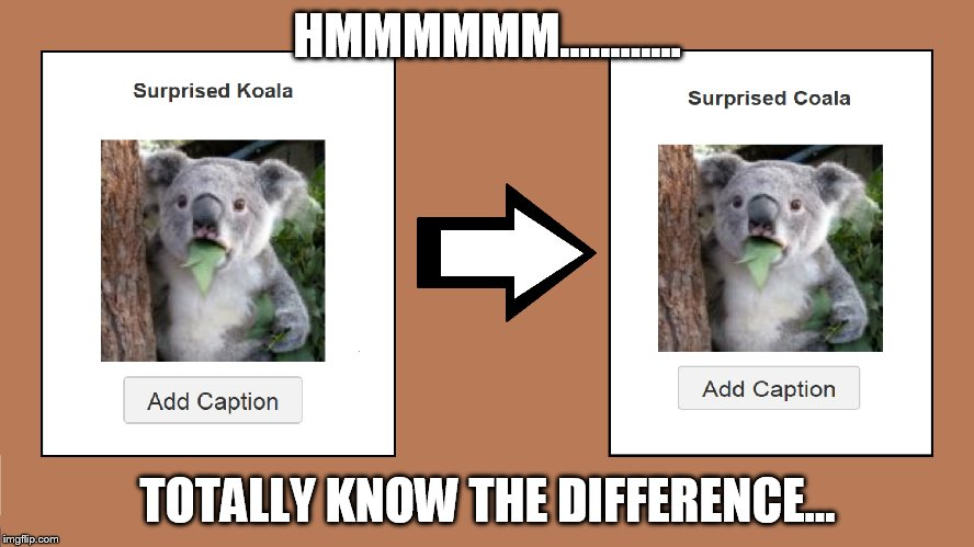 HMMMMMM............ TOTALLY KNOW THE DIFFERENCE... | image tagged in suprised koala,suprised coala,spot the difference | made w/ Imgflip meme maker