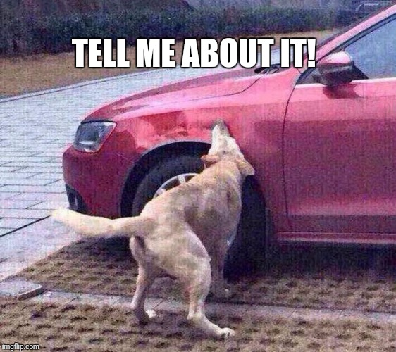 TELL ME ABOUT IT! | image tagged in dog caught car | made w/ Imgflip meme maker