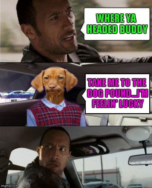 Every dog has his day!!! | WHERE YA HEADED BUDDY TAKE ME TO THE DOG POUND...I'M FEELIN' LUCKY | image tagged in rock driving bad luck raydog,funny,feelin' lucky,memes,the rock driving | made w/ Imgflip meme maker