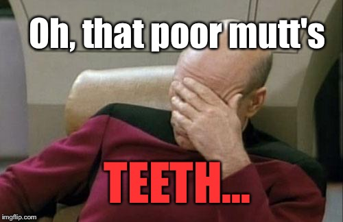Captain Picard Facepalm Meme | Oh, that poor mutt's TEETH... | image tagged in memes,captain picard facepalm | made w/ Imgflip meme maker