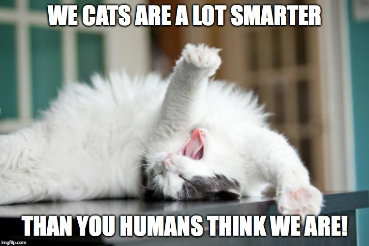 WE CATS ARE A LOT SMARTER THAN YOU HUMANS THINK WE ARE! | made w/ Imgflip meme maker