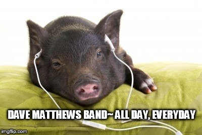 DMB~ ALL DAY, EVERYDAY | DAVE MATTHEWS BAND~ ALL DAY, EVERYDAY | image tagged in dmb,dave matthews band,pig,all day,everyday,all day everyday | made w/ Imgflip meme maker