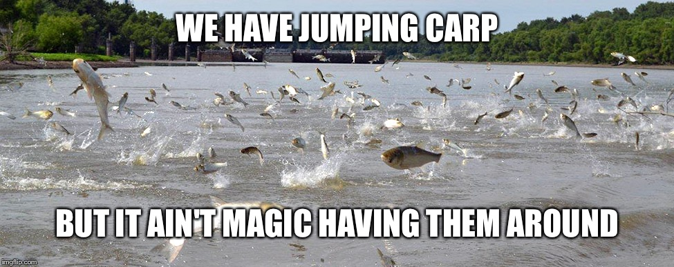 WE HAVE JUMPING CARP BUT IT AIN'T MAGIC HAVING THEM AROUND | made w/ Imgflip meme maker