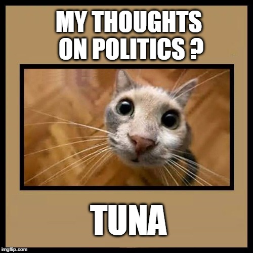 MY THOUGHTS ON POLITICS ? TUNA | image tagged in funny cats,politics,tuna,feed me | made w/ Imgflip meme maker
