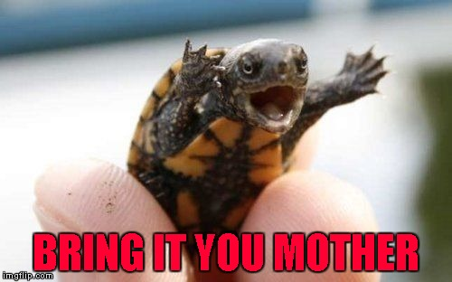 He might be tiny but you do not want to get bitten by him!!! | BRING IT YOU MOTHER | image tagged in bring it,memes,turtle,funny,baby snapping turtle,animals | made w/ Imgflip meme maker