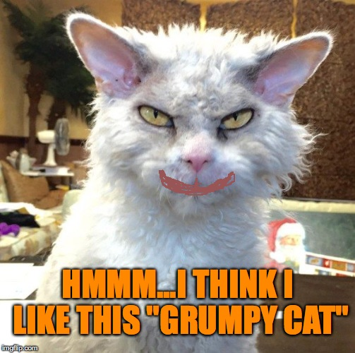 "HMMM...I THINK I LIKE THIS ""GRUMPY CAT"" 