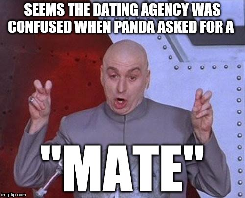 "Dr Evil Laser Meme | SEEMS THE DATING AGENCY WAS CONFUSED WHEN PANDA ASKED FOR A ""MATE"" 