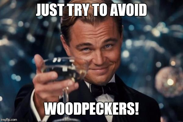 Leonardo Dicaprio Cheers Meme | JUST TRY TO AVOID WOODPECKERS! | image tagged in memes,leonardo dicaprio cheers | made w/ Imgflip meme maker