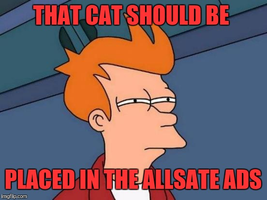 Futurama Fry Meme | THAT CAT SHOULD BE PLACED IN THE ALLSATE ADS | image tagged in memes,futurama fry | made w/ Imgflip meme maker